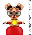 cute, dog, yorkie 30341608