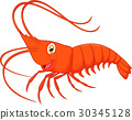 Cute cartoon shrimp 30345128