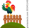 rooster, bird, cartoon 30345140