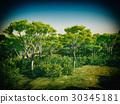 Bush trees in Australia 3d rendering 30345181
