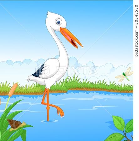 White stork searching food 30345550