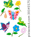 Cartoon butterfly, caterpillar and cocoon 30345575