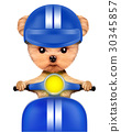 Adorable girl of yorkie sitting on a motorbike 30345857
