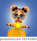 Adorable girl of yorkie sitting on a motorbike 30345866
