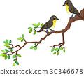 bird branch cartoon 30346678
