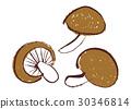 椎茸 蘑菇 插圖 30346814