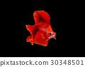 Betta fish, siamese fighting fish, aquarium fish 30348501