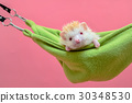 cute hedgehog sleep in the cot 30348530