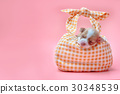 Newborn chihuahua puppy sleeping in bag 30348539