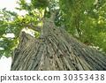 樹木 樹 巨大的 30353438