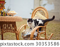 cat on rocking chair 30353586