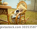 cat on rocking chair 30353587