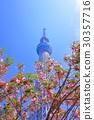 skytree tower, tokyo sky tree, cherry tree in leaf 30357716
