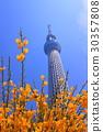 skytree tower, tokyo sky tree, bloom 30357808