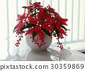 clay art, red Poinsettia pot 30359869