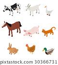 farm animal color 30366731