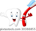 Dental Tooth and Toothbrush cartoon character 30366855