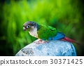 Parrot bird, animal and pet at natural park 30371425