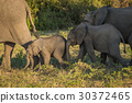 Two baby elephants in sunshine and shade 30372465