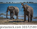 Two elephants enjoying mud bath beside river 30372580