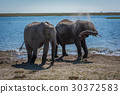 Two elephants getting dust bath beside river 30372583