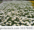 north pole, white, potted plants 30376081