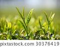 หญ้าอ่อน,ชา,ผักใบ 30376419