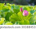 花 开花 花朵 30388453