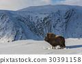 國家公園 挪威 野生 30391158