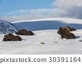 挪威 雪 冬天 30391164