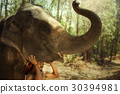 Thailand Mahout man and elephant is life 30394981