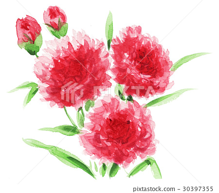 carnation17504pix7 30397355