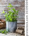 mint, pot, leaf 30399364