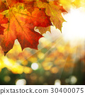 Autumn Border of Maple Leaves  30400075