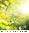 Summer Background with Green Foliage 30400085