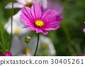 Beautiful winter Flowers 30405261