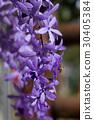 Beautiful winter Flowers 30405384