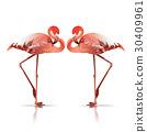 couple flamingo 30409961