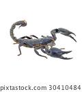 Scorpion isolated on white background 30410484