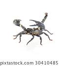 Scorpion isolated on white background 30410485