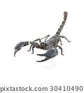 Scorpion isolated on white background 30410490