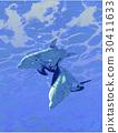 ปลาโลมาและทะเล 30411633