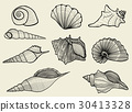seashells on beige background 30413328