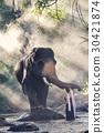 girl touching elephant's trunk 30421874