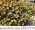 perennials, may, early summer 30427778