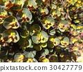 perennials, may, early summer 30427779