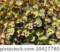 perennials, may, early summer 30427780