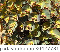 perennials, may, early summer 30427781