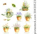 園藝 香草 草本的 30430523