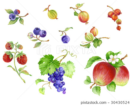 fruit, fruits, hand drawn 30430524